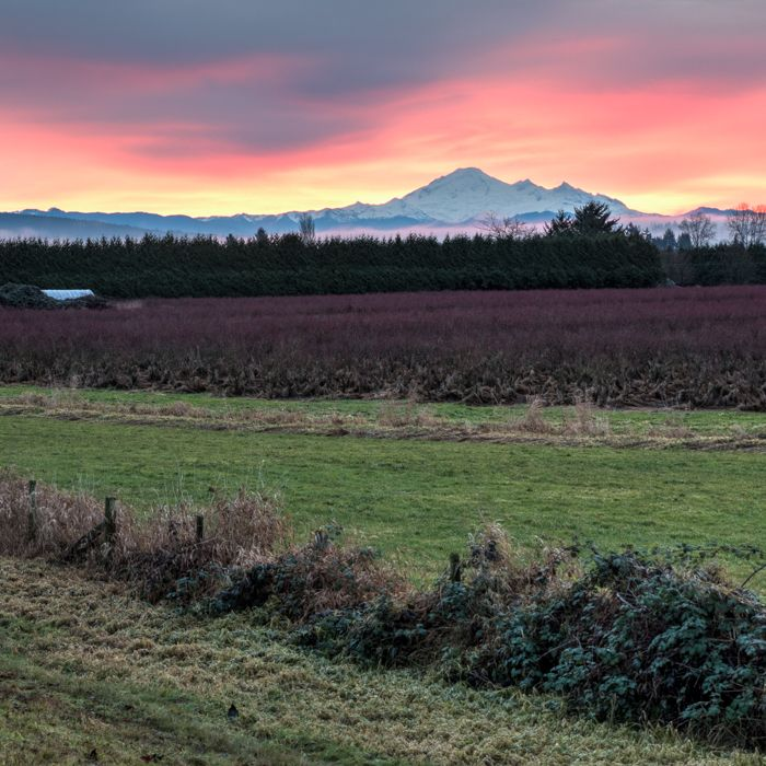 The sun setting behind Mount Baker left a cool pink glow in the clouds above the massive mountain.  Location: Trans Canada Trail, Pitt Meadows, British Columbia, Canada