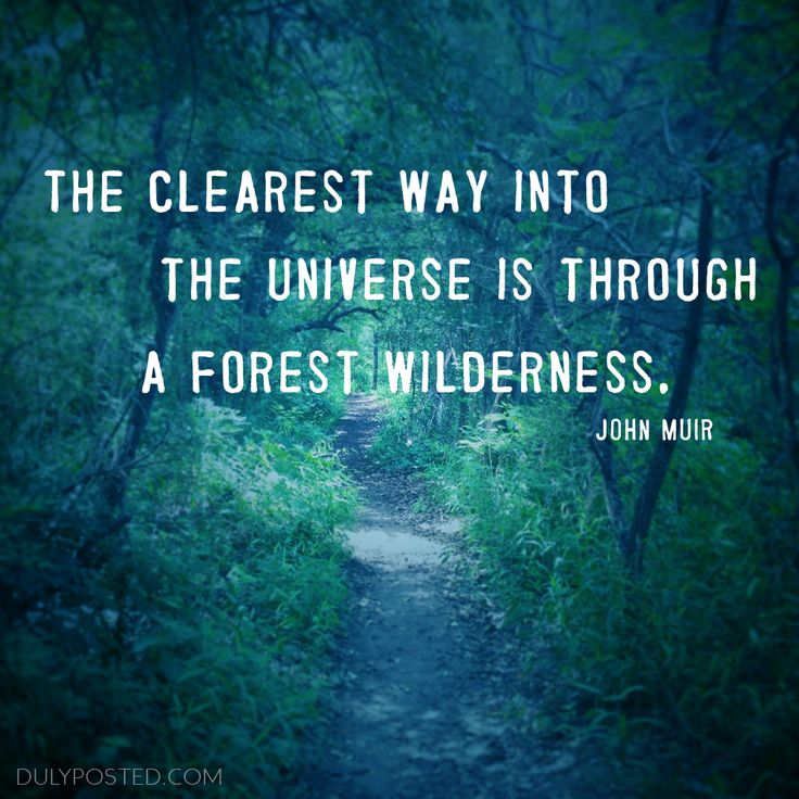 25+ Best Quotes About Nature On Pinterest