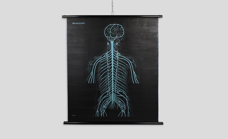 Available at: ww.onlyonceshop.com Beautiful vintage German school education poster from 1960 - 1980s. The board shows the human including nerves and nerve cells. The poster is rolled on a black wooden oval hanging piece and has another illustration showcasing respiratory and excretory organs on the backside. The poster can be flipped showing a different visualization. Comes in very good condition with only slight signs of use due to age.