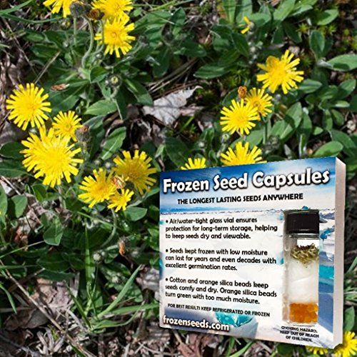 Gardening  MouseEar Hawkweed Seeds Hieracium pilosella 20 Medicinal Herb Seeds  FREE Bonus 6 Variety Seed Pack  a 2995 Value Packed in FROZEN SEED CAPSULES for Growing Seeds Now or Saving Seeds for Years * Click the VISIT button to enter the Amazon website