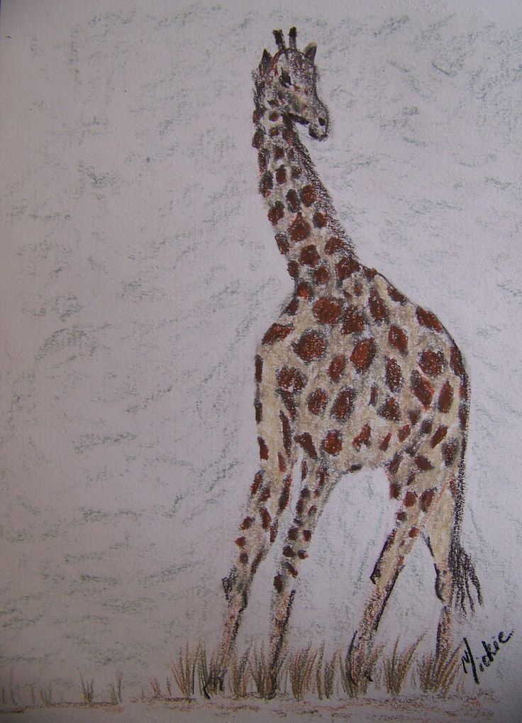A Pretty Talent Blog: Drawing and Coloring a Giraffe step by step with Derwent Drawing Pencils