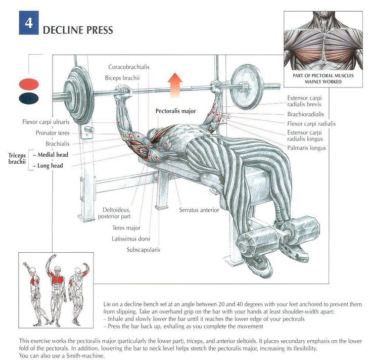 96 Best Bodybuilding Anatomy Images On Pinterest Fitness