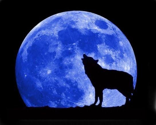 달 어둠 늑대