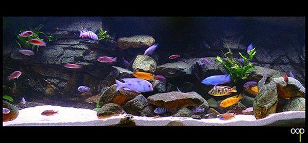 Malawi cichlids interesting rock layout aquarium for Cichlid fish tank