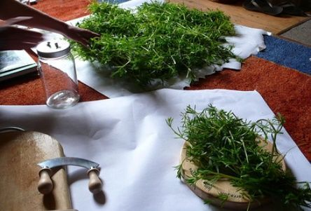 herbal tinctures are strong plant medicines, very easy to make