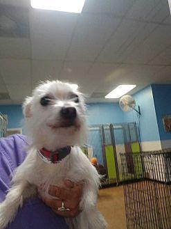 Dumfries, VA - Mixed Breed (Medium). Meet Magjic, a dog for adoption. http://www.adoptapet.com/pet/19215665-dumfries-virginia-mixed-breed-medium