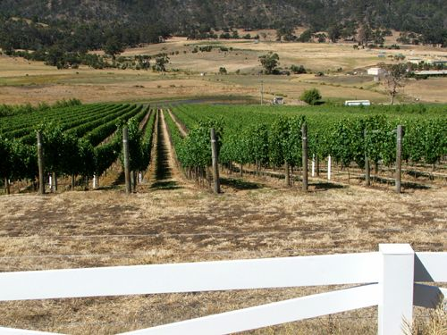 Pages Creek Vineyard (H)