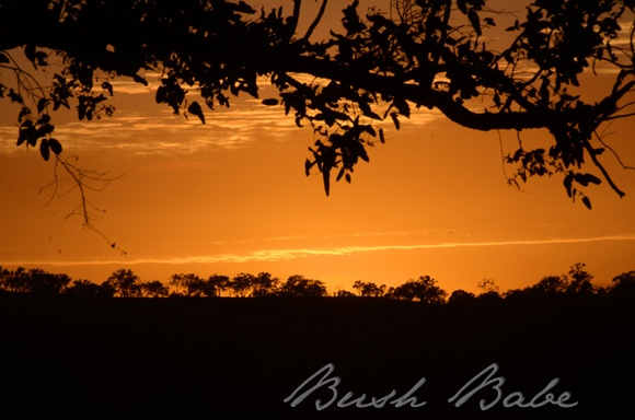 Sunrise in the bush...