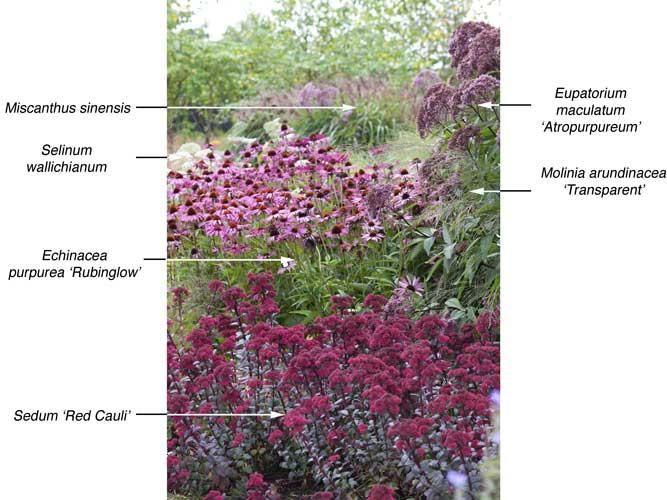 Pflanzenkombinationen