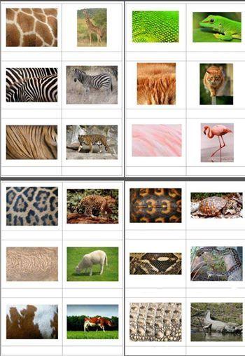 Encuentra las parejas de estos animales con sus texturas