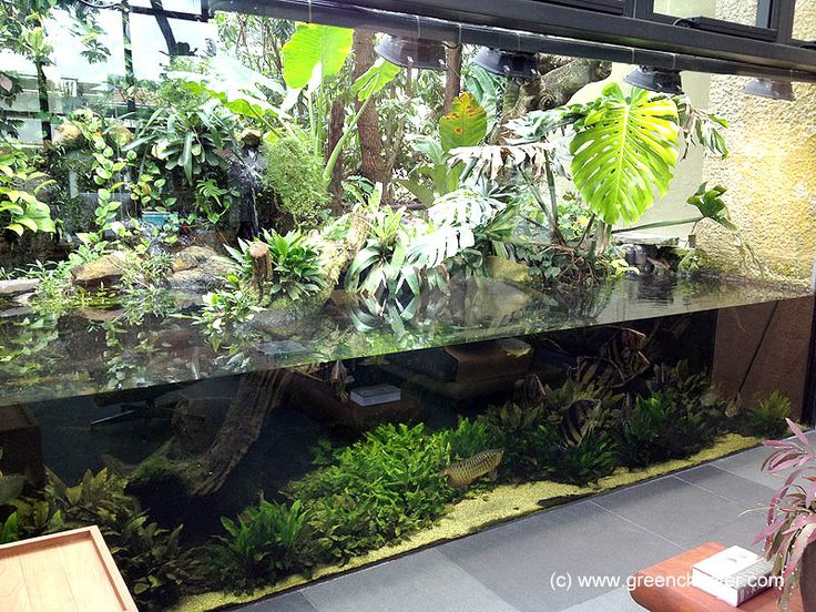 HUGE !!! Green Chapter - Stunning Aquarium Simply For You ...