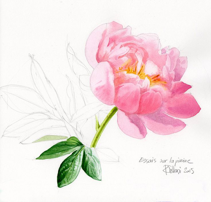 Pinturas Iris Stage Pivoine Au Mans | Watercolor Inspirations