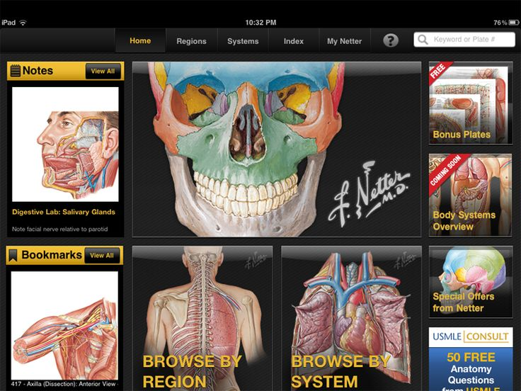 32 Best Netter Collection Images On Pinterest Human Anatomy Human