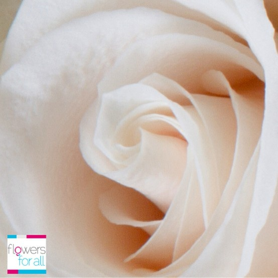 Flowersforall.com Ivory roses are a symbol of vitality and devotion. Share these emotions with your relatives or friends.