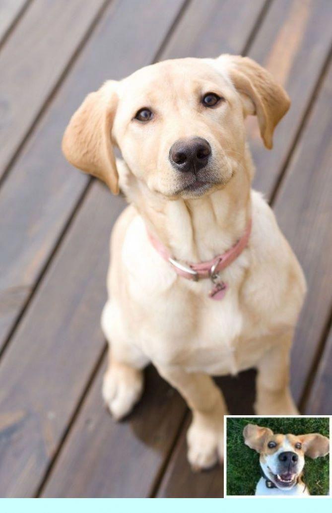 Leash Training Boston Terrier Dogtraining And Dog Training Tips