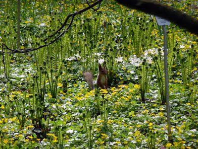 Portfolio Multimedeia: Pieni pyöreäpäinen orava ja emo. Äitienpäivää!