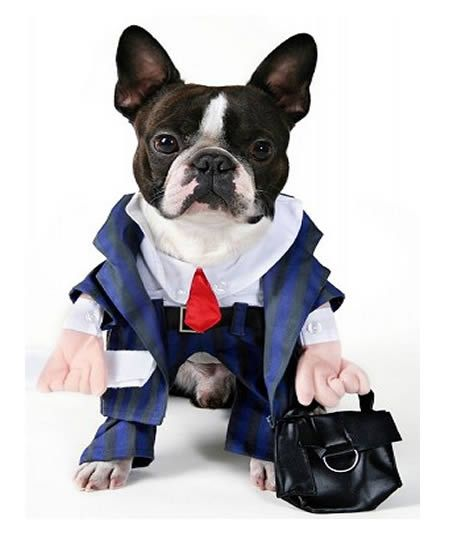 15 Hilarious Dogs in Costumes - Oddee.com (dog costumes, funny dog costumes)