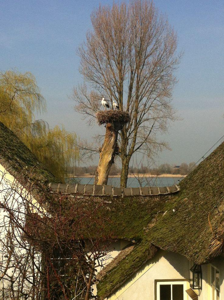Tot tranen geroerd door de schoonheid van Zuilichem. Deze foto heeft aan de basis gestaan van http://www.marketingvogels.nl