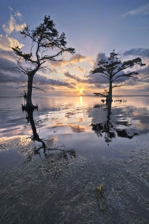 Trees at Sunrise Outer Banks NC - What a dream looks like when it wakes up in the morning*   (*By Tina Burger)