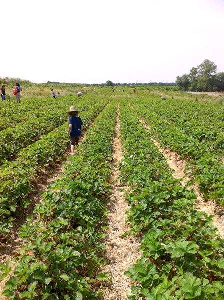 PYOP: Pick Your Own Produce at These Local Farms