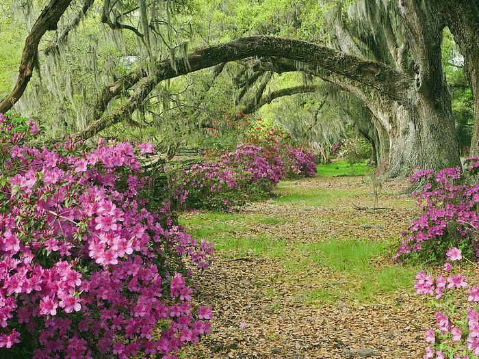 Magnolia Plantation, SC
