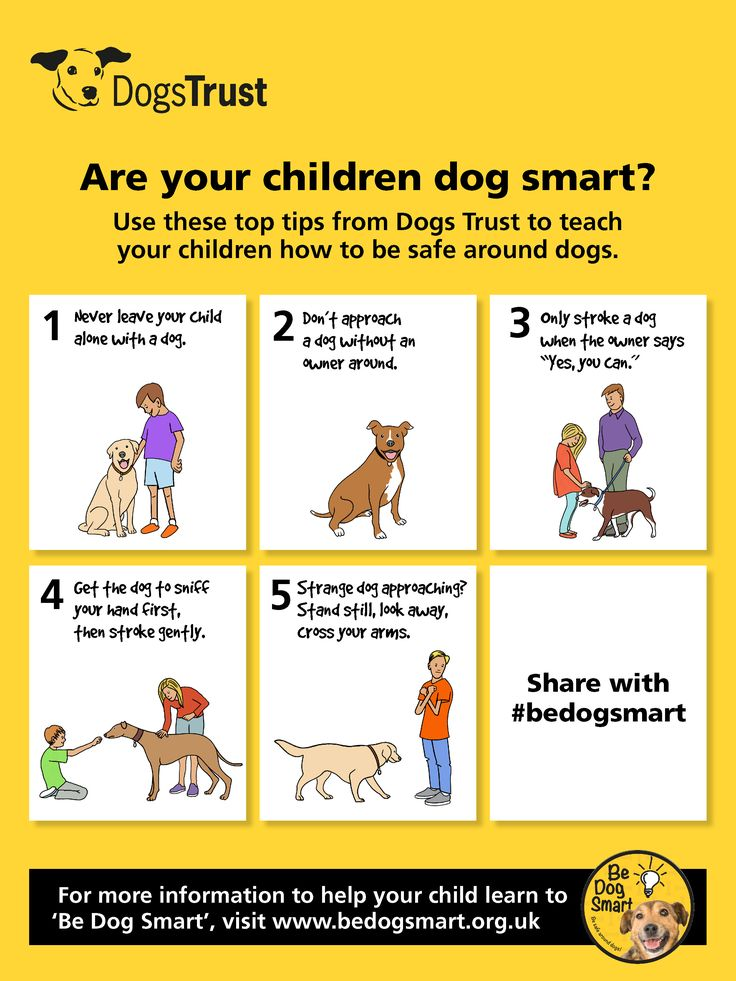 Is your child 'dog smart'? - Dogs Monthly | Dogs in the ...
