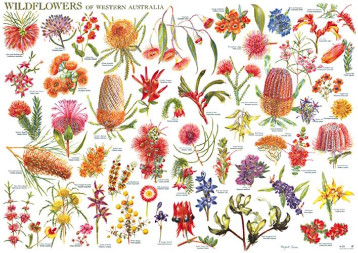 Wild Flowers of Western Australia Wall Chart available from Kalbarri Visitor Centre, www.kalbarri.org.au