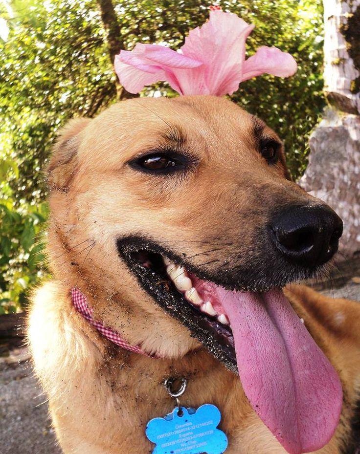 La experiencia de Linda, la perrita blogger en el #turisBlogV