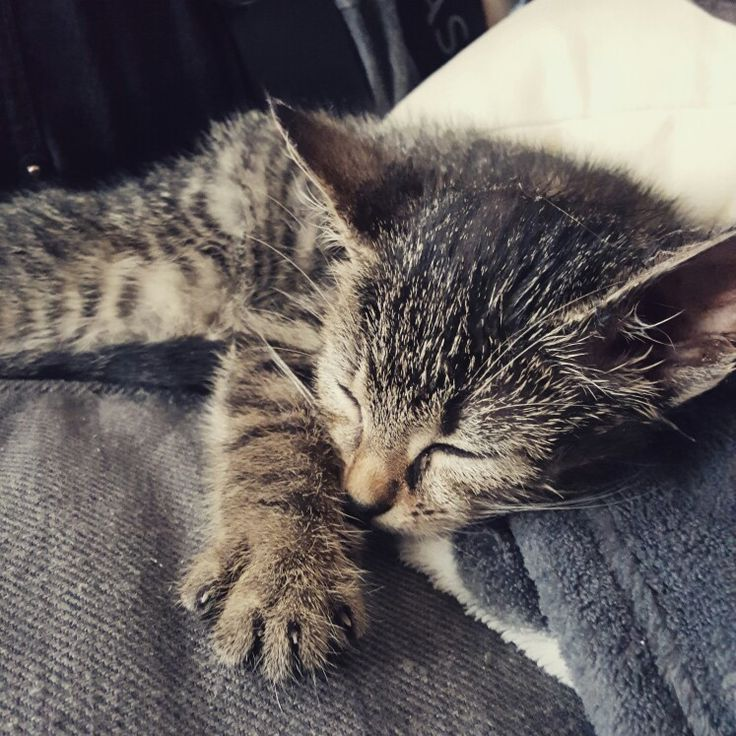 Our new kitten. BOWIE
