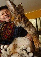 Beppe con un coniglio gigante. --  Il piccolo Bunny  --  Mr. Beppe with a giant rabbit.