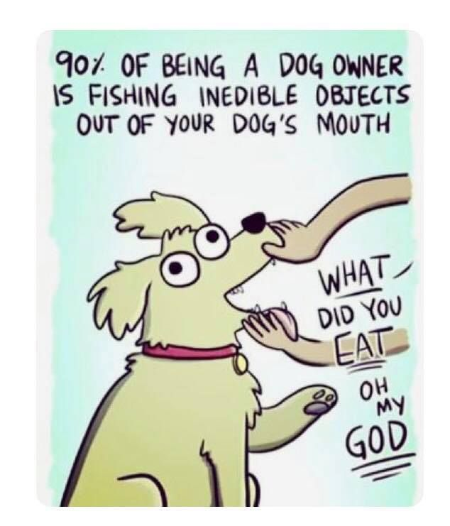 Dog Obedience School Cartoons Dog Obedience School Cartoon Funny