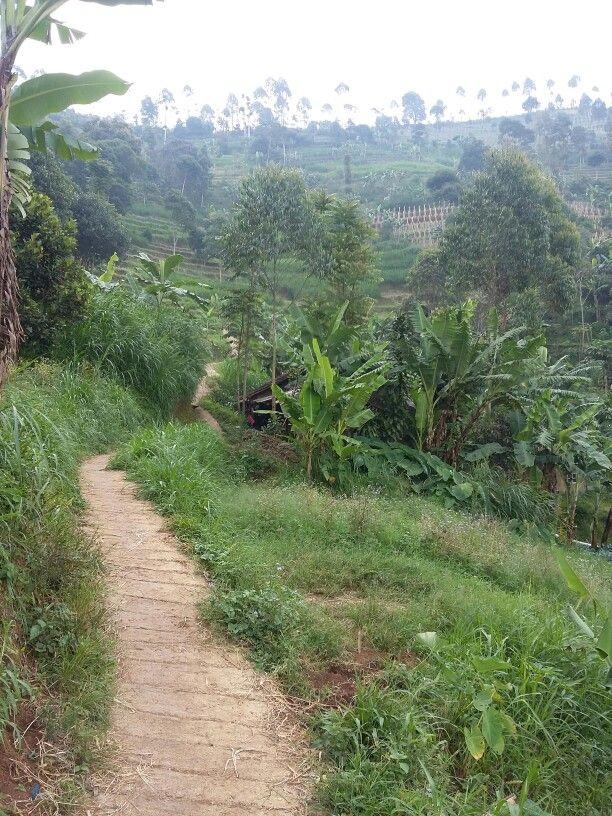 Jalan kampung di lembang
