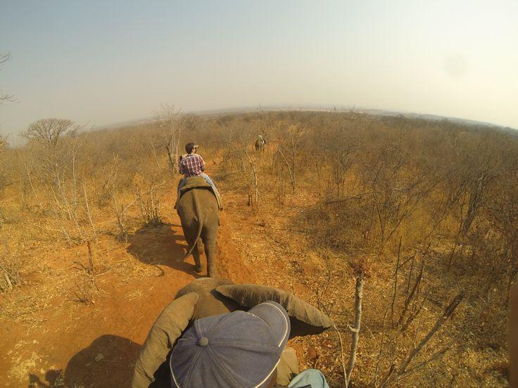 Reserva Natural - paseo en Elefante - Livingstone Zambia