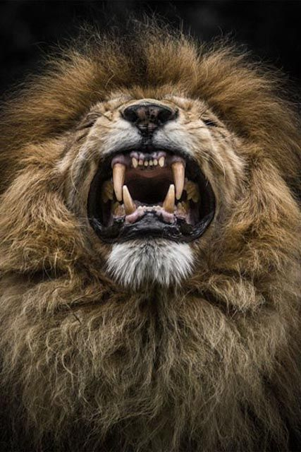 Best Tycoon Images On Pinterest Wild Animals Animal Kingdom - Powerful and intimate black white animal portraits by luke holas