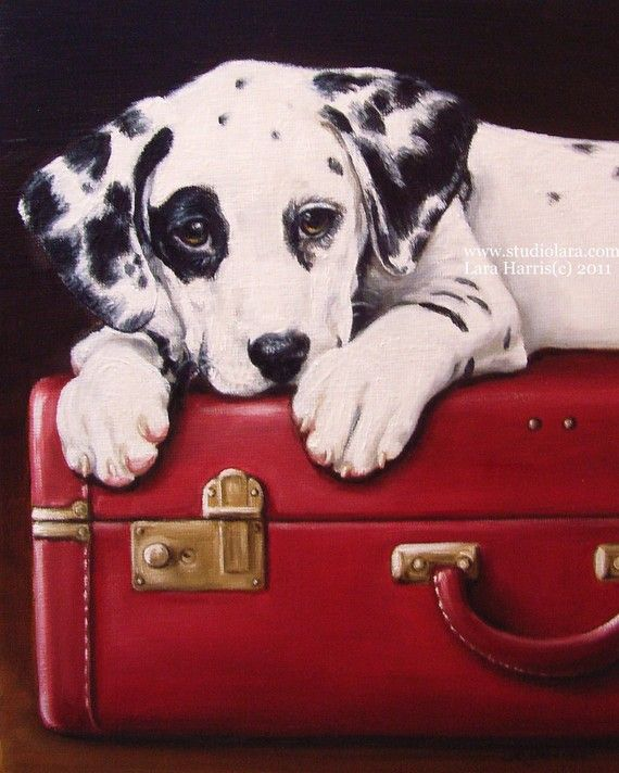 Dalmatian on Vintage Red Suitcase...I had to pin this! My favorite decor; Vintage. My favorite color; Red. My favorite dog beed; Dalmation. That's 3 out of 3...It's a winner!!!