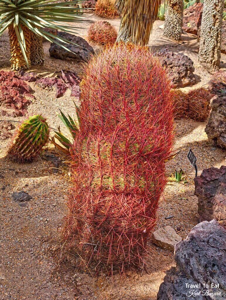 22 Best Fruits Of Joshua Tree National Park Images On Pinterest Fruit National Parks And