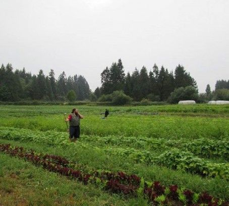 Local Greenhouse or Veggie Grower: Farmship Growers Co-operative #WeHeartLocal