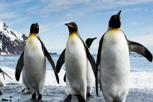 quark expeditions to north pole