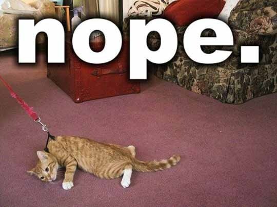 nope: Laughing, Cat, Dogs, Walks, Mondays Mornings, Funny Stuff, So Funny, Kitty, Animal