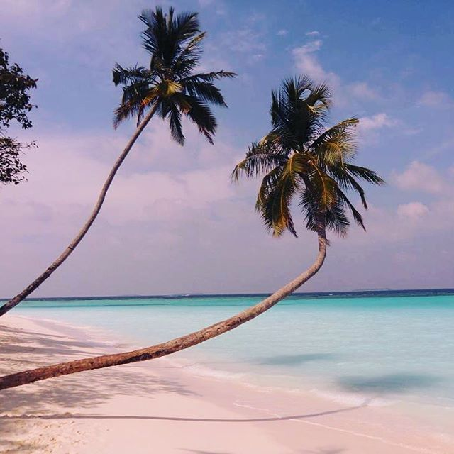 #travelmaldives #maldiveislands #sunnysideoflife #maafushi #holiday #maledivy #maldivy #malediven #maldivas #モルディブ #马尔代夫 #몰디브 #dambulla #kandy #simpol #srilanka #livingthedream #neverstop #exploremaldives #exploreworld #lovetotravel #traveldiary #viewfromthetop #travelphotography #reflex #letsgoeverywhere #photography #tour #newyear