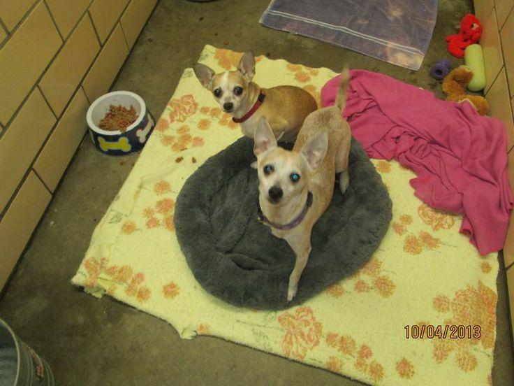 Kern County Dog Adoption