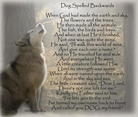 Dog = God Wow! I have been saying this for some time. I have experienced the Agape Love of GOD but I would say this poem is so true. My dogs have shown me the nearest to Agape love that I think is available on this earth in another creature. A dog shows so many characteristics of GOD: a dog is Loving, Faithful, Trustworthy, Forgiving, Loyal & True...(s)he will lay down his life for you. -LJK