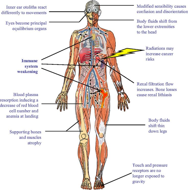 14 best school images on pinterest | immune system, body systems, Muscles