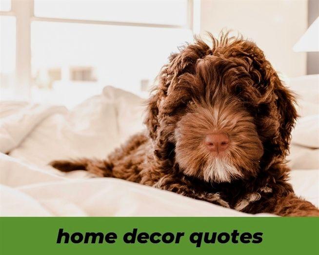Home Decor Quotes 705 20181119093442 62 Home Decor Appliances