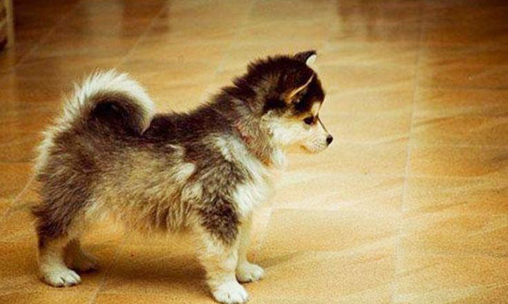 Il existe d'innombrables races de chien dans le monde, toutes avec des particularités bien distinctes. Mais quand celles-ci se rencontrent, vous obtenez des spécimens uniques en leur genre. DGS vous présente 23 chiens hors du commun, aussi beaux les uns que les autres. ...