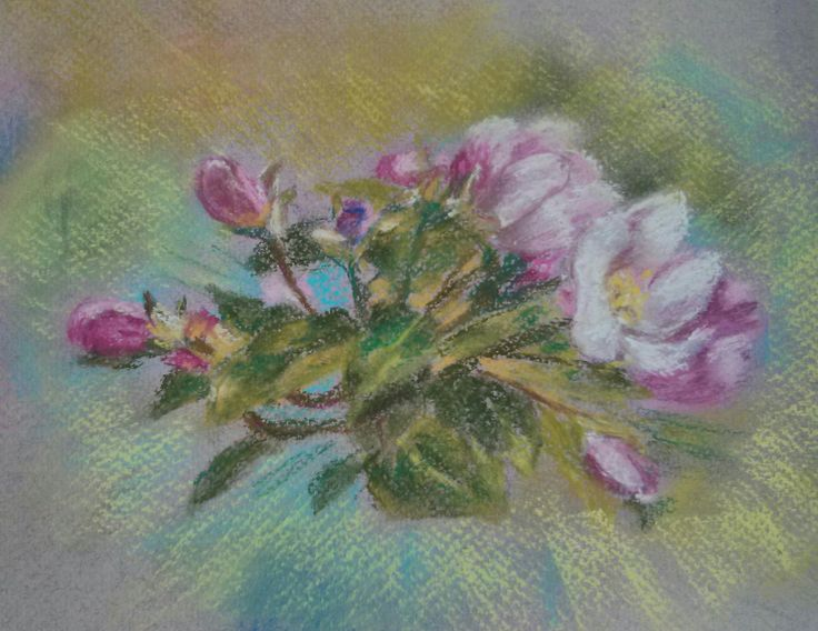 Apple blossom. Pastel soft, pastel paper