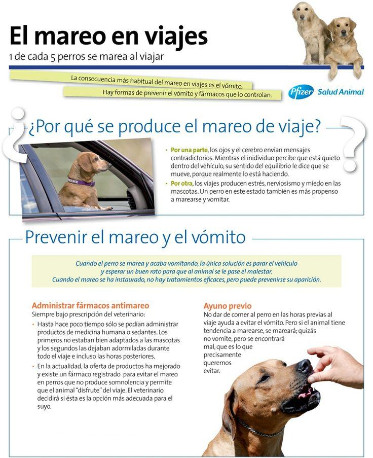 El #mareo en los viajes, causas y prevención en perros.