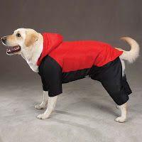 Accesorios para Perros: chubasqueros para perros