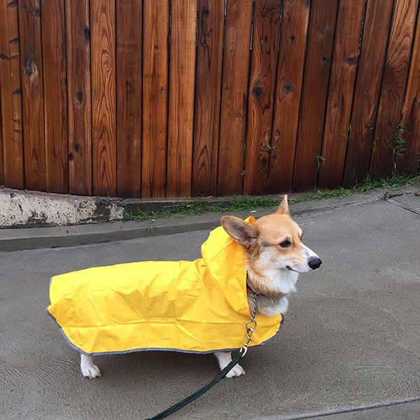 Raindrops keep fallin' on my head....