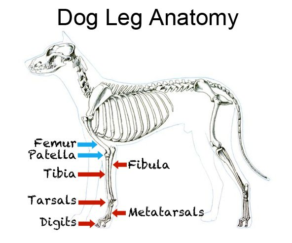 How To Treat Pulled Leg Muscle In Dog